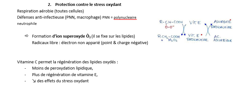 Protection contre le stress oxydant.png